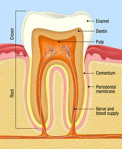Bradford Family Dentistry Root Canal